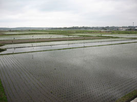 農園の周りの田んぼ